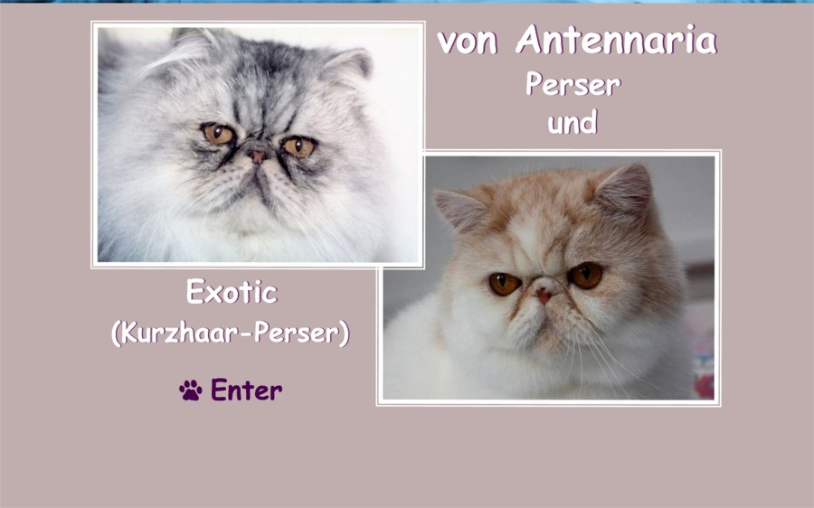 Perser & Exotic von Antennaria
